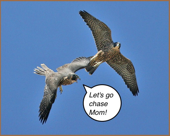 juveniles sparring Photo by Cleve Nash